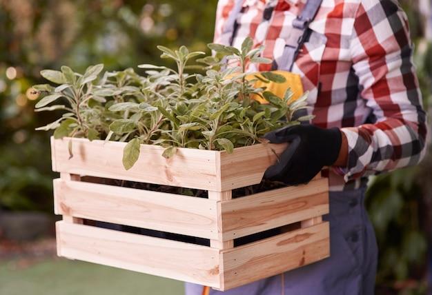 Homme méconnaissable tenant une caisse en bois avec des semis