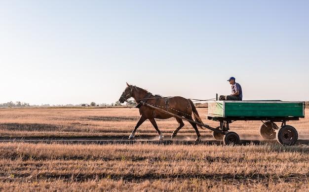 Un homme monté sur un chariot