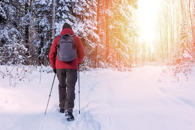 Homme mûr ou adulte randonnée et marche nordique dans la nature hivernale. personnes actives à l'extérieur. concept de mode de vie sain.