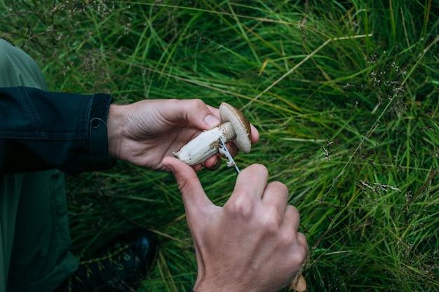 Homme nettoyer les champignons cueillis sauvages frais
