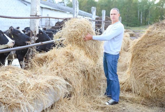 Homme nourrir les vaches dans une ferme en plein air