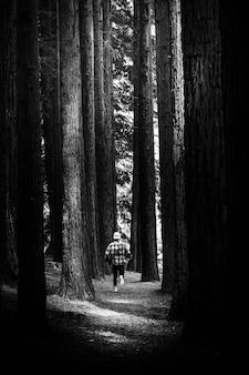 Homme perdu courant dans une forêt de pins
