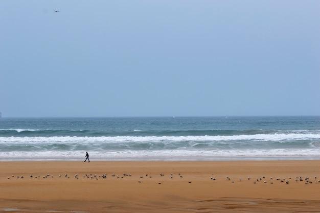 Homme qui marche sur une plage avec des mouettes. au fond la mer avec des vagues.