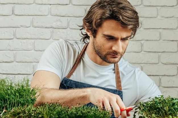 Un homme de race blanche cultive un micro vert à la maison
