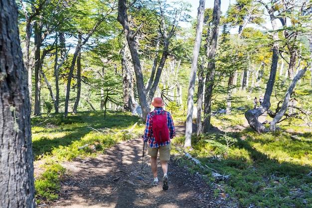 Homme de randonnée dans la forêt