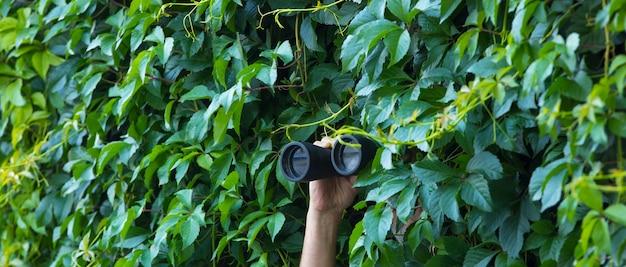 L'homme regarde à travers des jumelles dans les feuilles