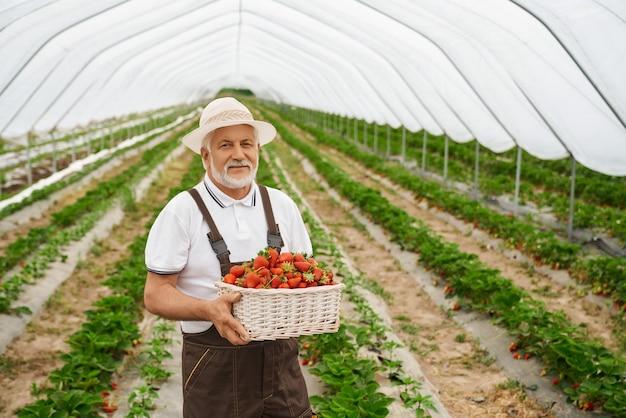 Homme supérieur gardant et admirant la fraise rouge fraîche