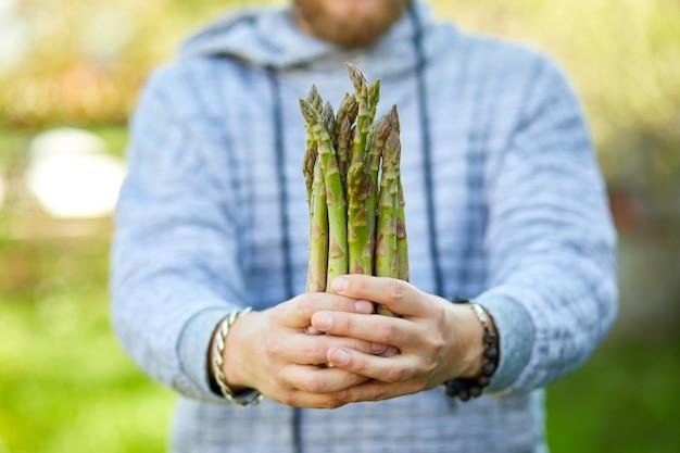 Homme tenant un bouquet d'asperges vertes dans ses mains en plein air, lances d'asperges vertes fraîches au soleil, copiez l'espace pour le texte. récolte, prêt à cuisiner, régime végétalien sain, nourriture locale.