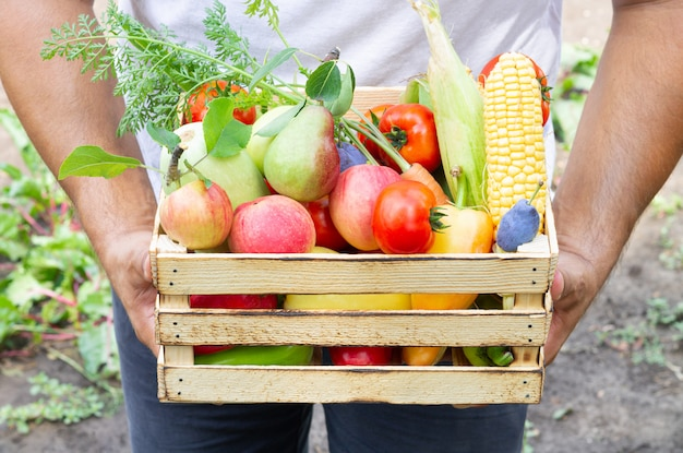 Homme tenant une caisse rustique pleine de fruits et légumes frais écologiques. concept d'aliments sains biologiques