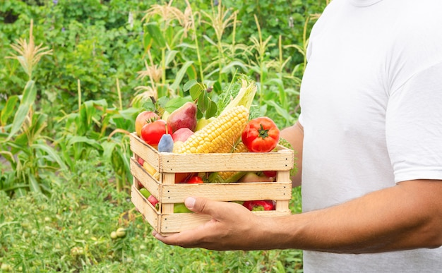 Homme tenant des fruits et légumes biologiques frais dans une boîte en bois. concept d'alimentation propre
