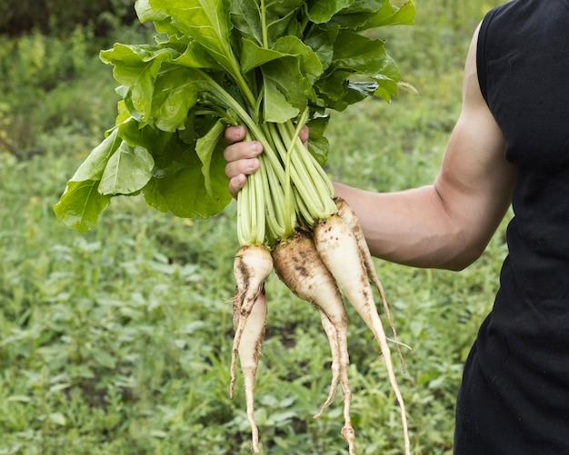Homme tenant la récolte de panais