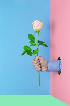 Homme tenant une rose rose à la main sur un fond coloré. fond de texture d'idée de concept d'amour. fond festif créatif de la saint-valentin, de la femme ou du concept d'anniversaire.