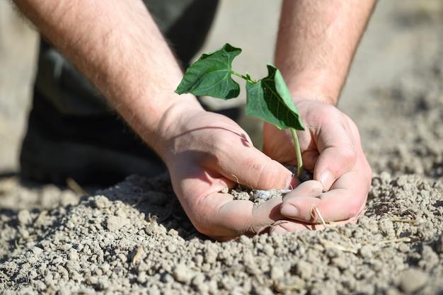 Homme, tenue, graine, arbre, planter, sol