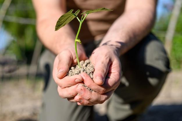 Homme, tenue, peu, plante