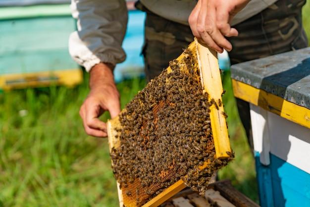 Un homme tient un cadre avec du miel et des abeilles au-dessus de la ruche.