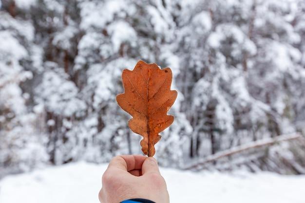 Un homme tient dans sa main une feuille de chêne sèche de couleur rouge sur fond de forêt enneigée