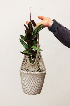 Un homme tient dans sa main un pot avec une fleur sur le fond du mur. emballage écologique pour plantes en pot. fleur de ktenana