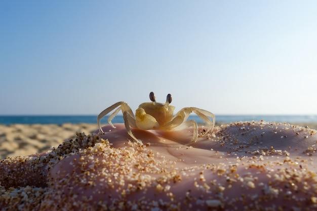 Un homme tient sur sa main un petit crabe.