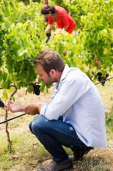 Homme touchant des raisins