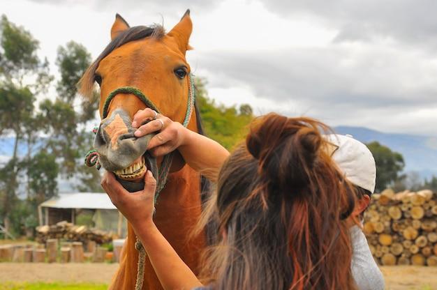 Homme vérifiant les dents d'un cheval