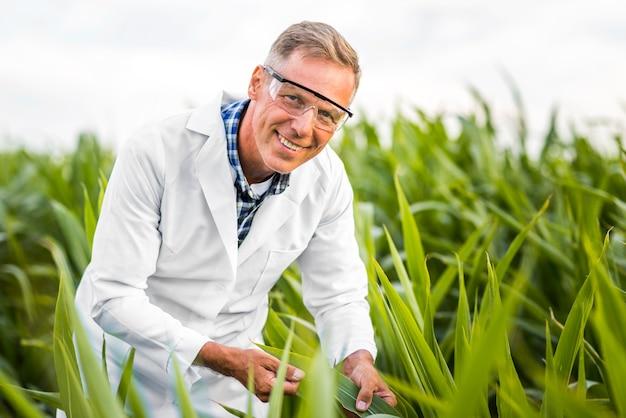 Homme vue moyenne, dans, a, champ maïs