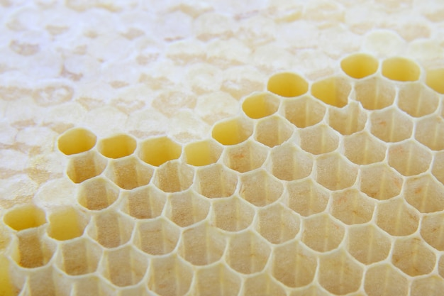 Honey comb close up
