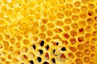 Honey comb, en nid d'abeille