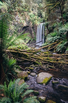 Hopetoun tombe dans le parc national de great otway, victoria, australie.