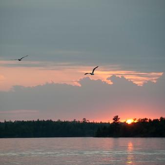 Horizon du coucher du soleil sur le lac des bois, ontario