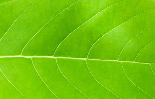 L'horizontal de la feuille verte fond texturé