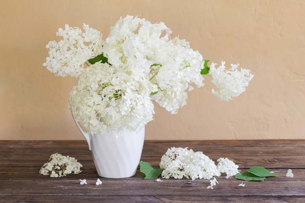 Hortensia blanc en cruche