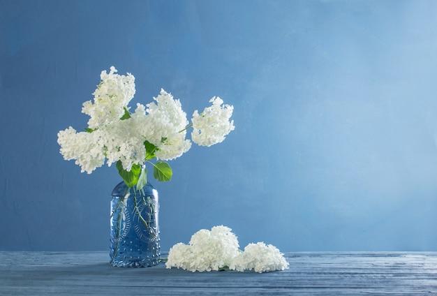 Hortensia blanc dans un vase sur table bleue