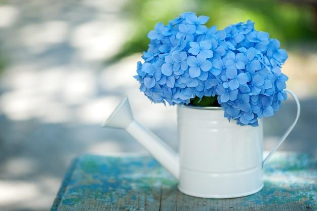 Hortensia bleu dans un arrosoir sur fond naturel dans le jardin