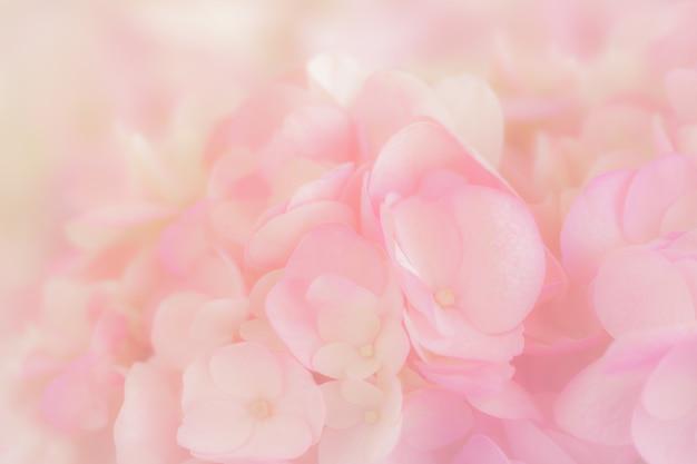 Hortensia avec une couleur pastel douce dans un style flou pour l'arrière-plan