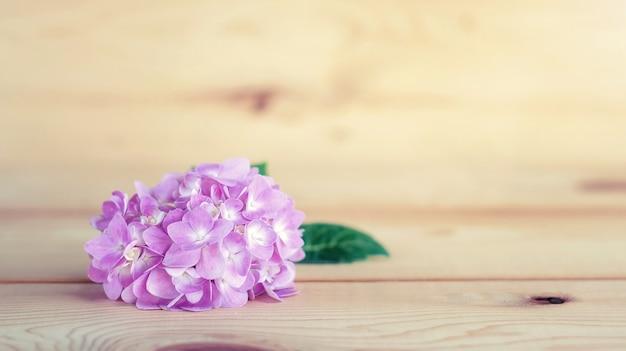Hortensias roses sur un fond en bois.
