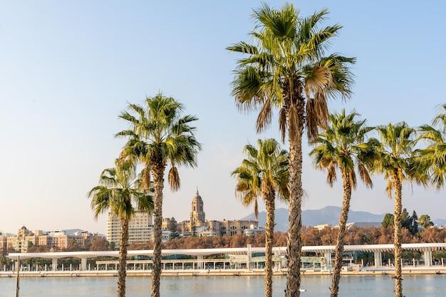 Hôtel de ville de malaga au loin derrière des palmiers