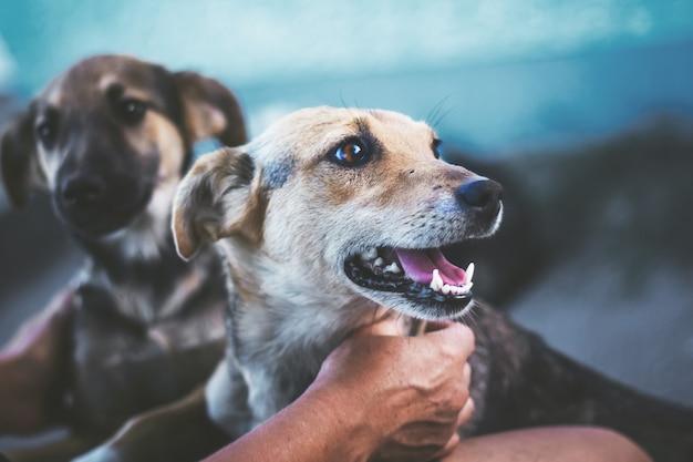 L'hôtesse caresse le chien, l'animal regarde ailleurs, quelque chose le distrait