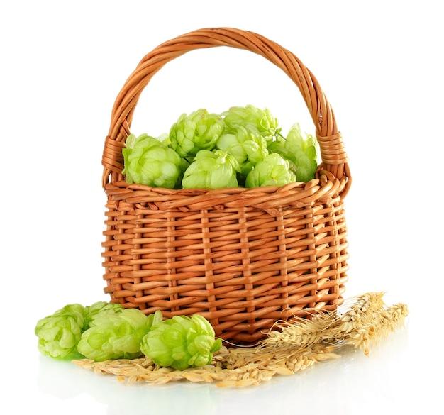 Houblon vert frais dans le panier en bois et l'orge d'isolement sur le blanc
