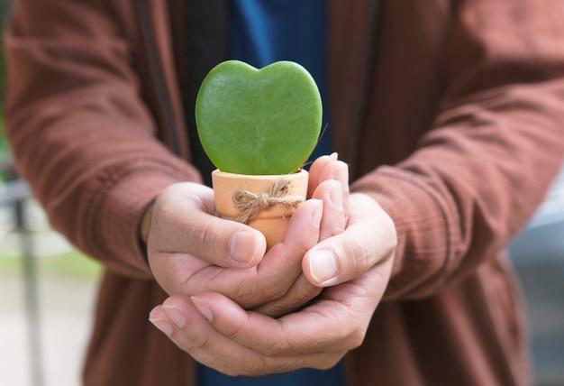 Hoya kerrii, chérie hoya care, symbole de l'amour