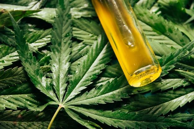 Huile de cannabis dans le flacon compte-gouttes avec des feuilles vertes. concept de médecine alternative.