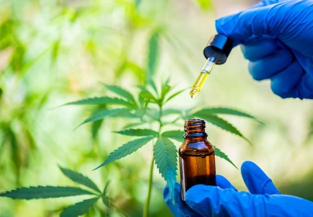 Huile de chanvre cbd, goutte à goutte, bio-médecine et écologie, plante de chanvre, herbe, médecine, huile de cbd issue d'extraction médicale