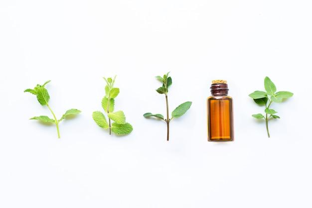 Huile essentielle avec différents types de menthe sur blanc