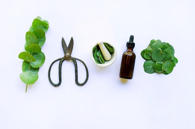Huile essentielle d'eucalyptus avec branche, feuilles d'eucalyptus et ciseaux vintage sur blanc
