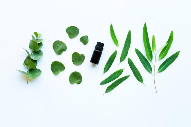 Huile essentielle d'eucalyptus sur fond blanc