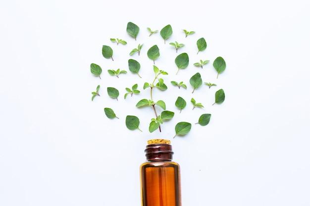 Huile essentielle avec des feuilles d'origan fraîches