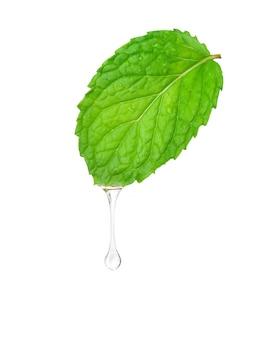 Huile essentielle de menthe dégoulinant de feuilles fraîches isolé sur fond blanc.