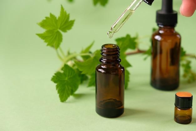 Huile essentielle tombant du compte-gouttes en verre. béribéri, renforçant le système immunitaire. branche de groseilles