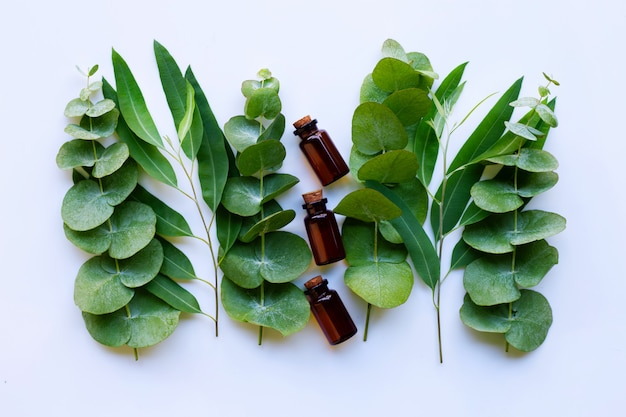Huiles essentielles d'eucalyptus avec des branches d'eucalyptus