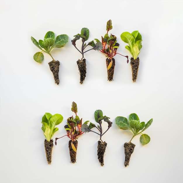 Huit plantes