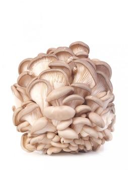 Huître aux champignons